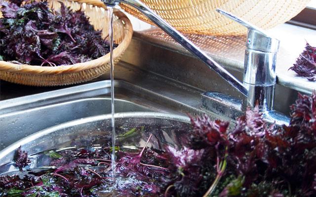 赤紫蘇を流水で洗うところ